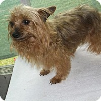 Adopt A Pet :: Delilah - Bonifay, FL