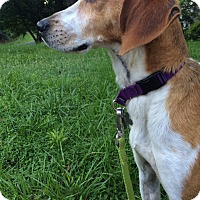 Adopt A Pet :: Paige - Richmond, VA