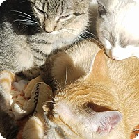 Adopt A Pet :: Elliot - Chippewa Falls, WI