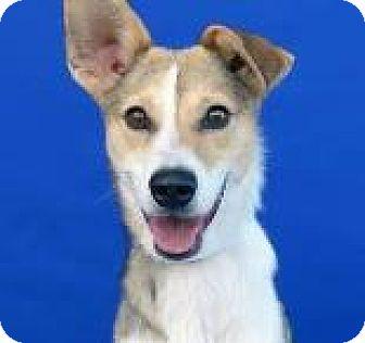 Terrier (Unknown Type, Medium) Mix Dog for adoption in Covington, Louisiana - Katrina