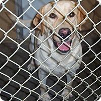 Adopt A Pet :: Banjo - Fall River, MA
