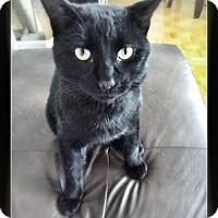 Adopt A Pet :: Pepper - Toronto, ON