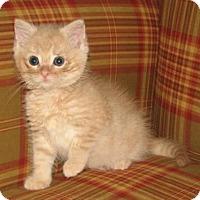 Adopt A Pet :: Alazar (baby boy) - Harrisburg, PA