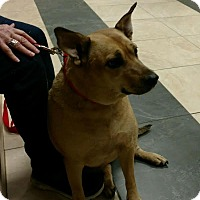 Adopt A Pet :: Lady Bug - Huntley, IL