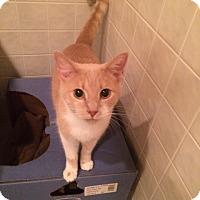 Adopt A Pet :: Frank - Byron Center, MI