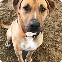 Adopt A Pet :: 'Benji' - Fresno, CA