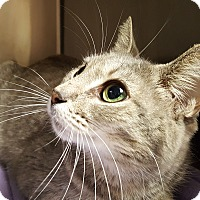 Adopt A Pet :: Layla - Friendswood, TX