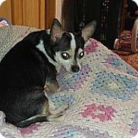 Adopt A Pet :: ED - Toledo, OH