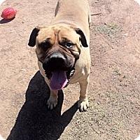 Adopt A Pet :: Bueller - Phoenix, AZ