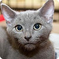 Adopt A Pet :: Morgan - Irvine, CA