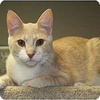 Adopt A Pet :: BOB - SILVER SPRING, MD