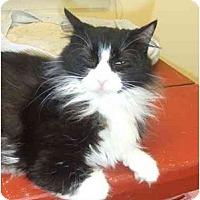 Adopt A Pet :: Amanda - Lake Charles, LA