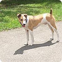 Adopt A Pet :: Dash - CHESTERFIELD, MI