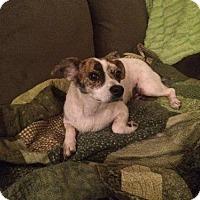 Adopt A Pet :: Mulberry - Royal Palm Beach, FL