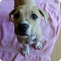 Adopt A Pet :: Leilah - Hollywood, FL