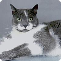 Adopt A Pet :: Silver - Alameda, CA