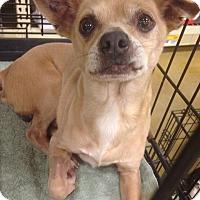 Adopt A Pet :: Roo - Gainesville, FL