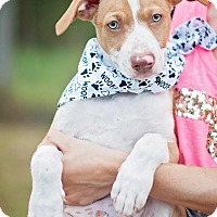Adopt A Pet :: Junior - Kingwood, TX