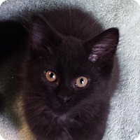 Adopt A Pet :: Lawrencia - Milford, OH