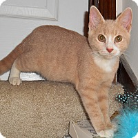 Adopt A Pet :: Bartholomew - Chattanooga, TN