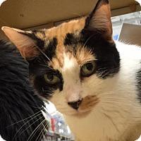 Adopt A Pet :: Patches - Atlanta, GA