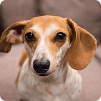 Adopt A Pet :: Jack - Edmonton, AB