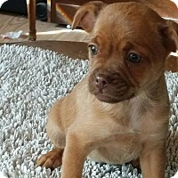 Adopt A Pet :: MAGENTA - Rancho Cucamonga, CA