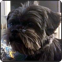 Adopt A Pet :: GIGI GRACE in Linden, VA. - Seymour, MO