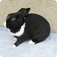 Adopt A Pet :: Digby - Bonita, CA