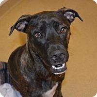 Adopt A Pet :: Octavia - Miami, FL