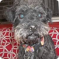 Adopt A Pet :: Scott - Memphis, TN