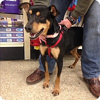 Adopt A Pet :: Pepper - Delaware, OH