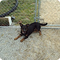 Adopt A Pet :: Zeus - Jamestown, TN