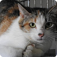 Adopt A Pet :: Polly - Gainesville, FL