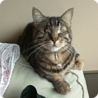 Adopt A Pet :: Claude *blind* - Toronto, ON