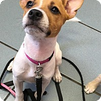 Adopt A Pet :: Fiona - Bellbrook, OH