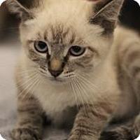 Adopt A Pet :: Merlot - Sacramento, CA