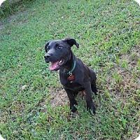 Adopt A Pet :: Vador - Charleston, SC