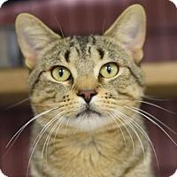 Adopt A Pet :: Sandstone - St. Paul, MN