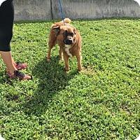 Adopt A Pet :: Linda - Maquoketa, IA