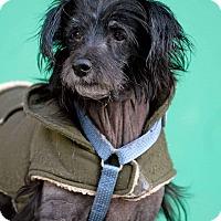Adopt A Pet :: Milton - Pottsville, PA