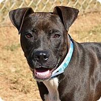 Adopt A Pet :: Miles - Athens, GA