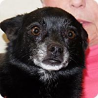 Adopt A Pet :: Picasso - Spokane, WA