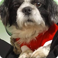 Adopt A Pet :: PonPon - Pierrefonds, QC