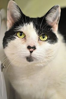 Declawed Cats For Adoption In Philadelphia