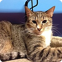 Adopt A Pet :: Moirne - Topeka, KS