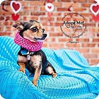 Adopt A Pet :: Jenny Penny - Shawnee Mission, KS