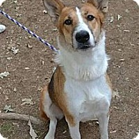 Adopt A Pet :: ALICE - ROCKMART, GA