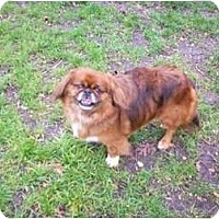 Adopt A Pet :: Kyden - Virginia Beach, VA