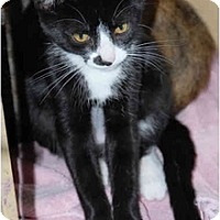 Adopt A Pet :: Nosey - Warminster, PA